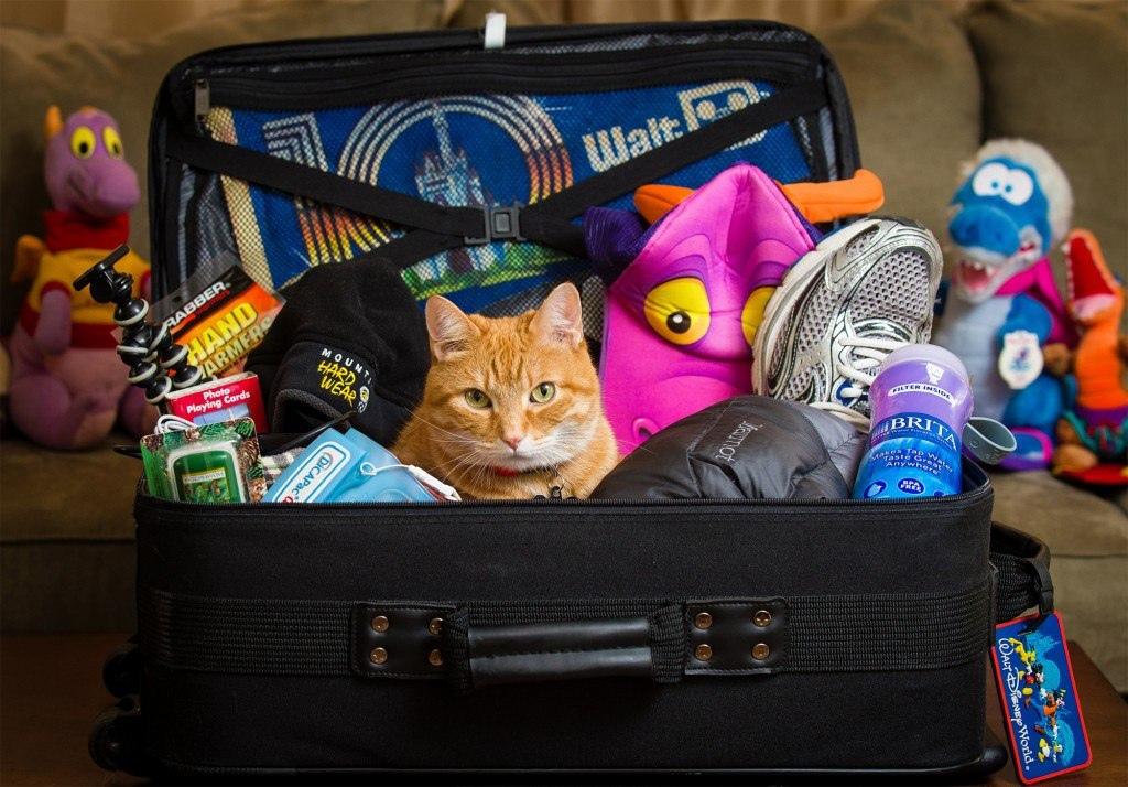 Как правильно собрать чемодан, чтобы всё поместилось?